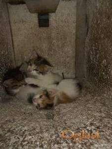 4 domaća mačića na poklon